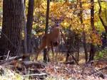 032712_deer