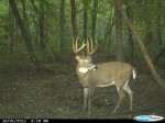 giant whitetail buck on trail camera - whitetail deer hunting