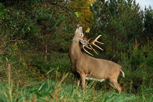 Alsheimer on Deer & Deer Hunting