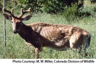 Deer with CWD have been found in 22 states and in Canada.