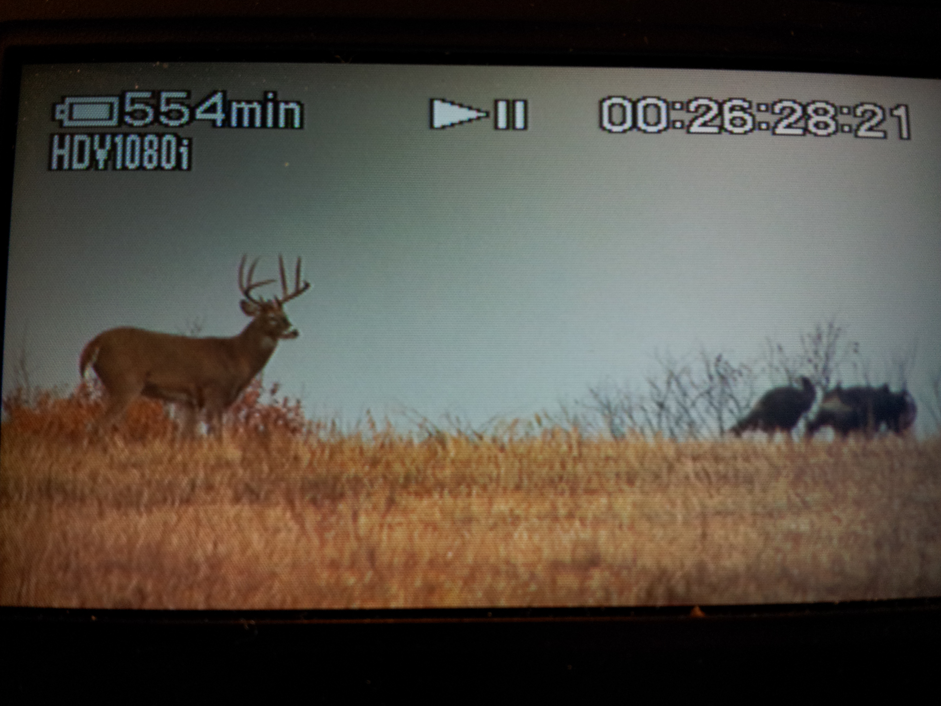 So close to getting this mature 9 pt. buck killed on camera in southern Iowa.