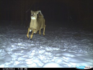 (photo courtesy of Cuddeback Cameras)