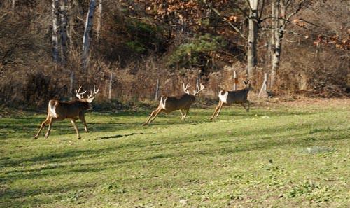Charles J. Alsheimer on Deer & Deer Hunting