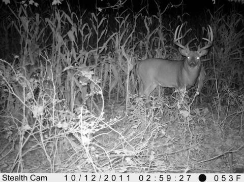 Trail Camera Photos Deer Amp Deer Hunting Whitetail Deer