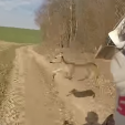 ATV Rider and deer