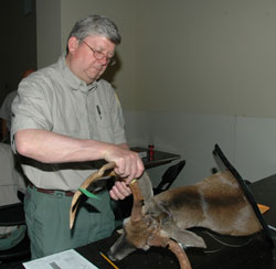 Antler Measuring