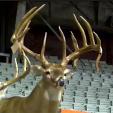 Arkansas monster buck1