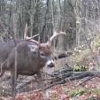 BUCK buck 4