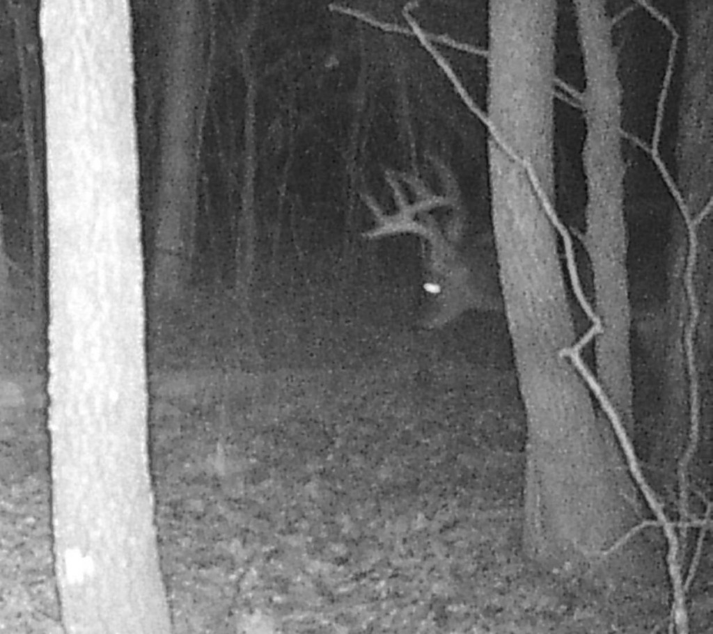 This big buck showed up only a couple of times on my game camera. Without a camera I'd never have known he was there or how big he was.