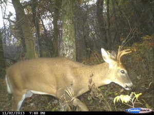 Shoot this buck in some parts of Michigan, and you could be looking at thousands of dollars in fines, possible jail time, and losing your hunting license for years. (photo copyright Daniel E. Schmidt)