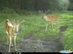 Mineral licks that deer use