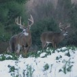 January Food Plots