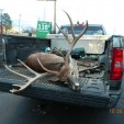 Chasing Trophy Whitetails 2012