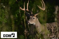 DDH TV: Pattern Deer Without Being Patterned