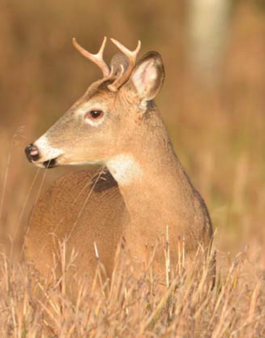 Ground Blind Offers Protection From The Elements Deer