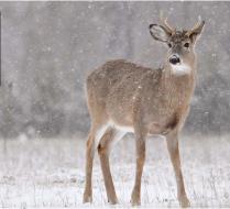 deer-spike-on-one-side1