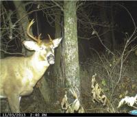 Once a Spike, Always a Spike: Deer Hunting's Big Myth
