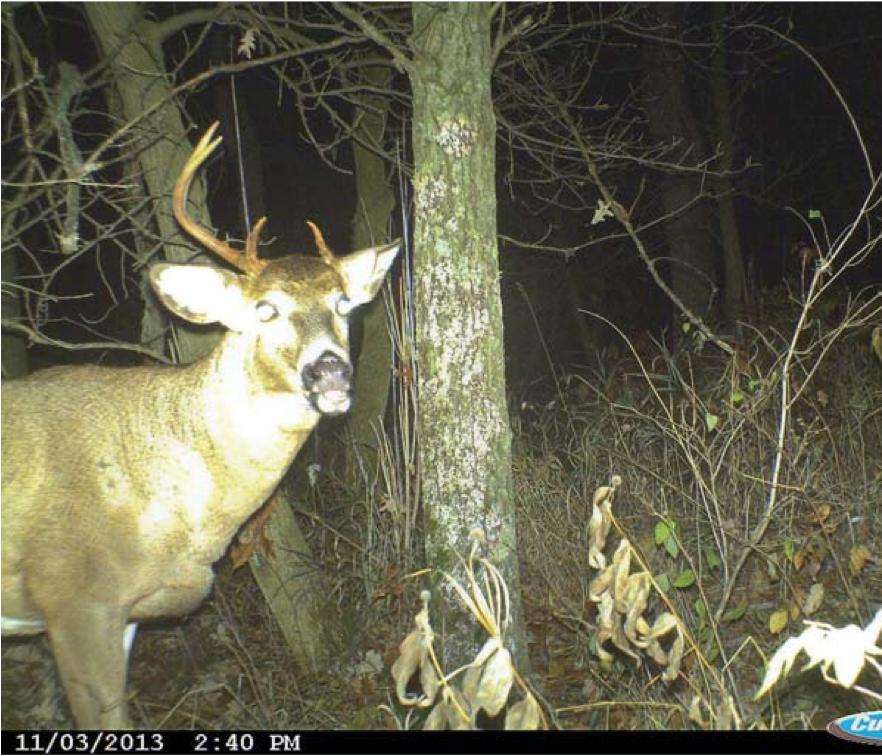 deer-spike-on-one-side2