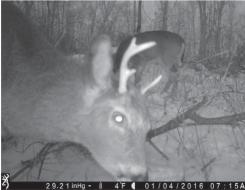 deer-spike-on-one-side3