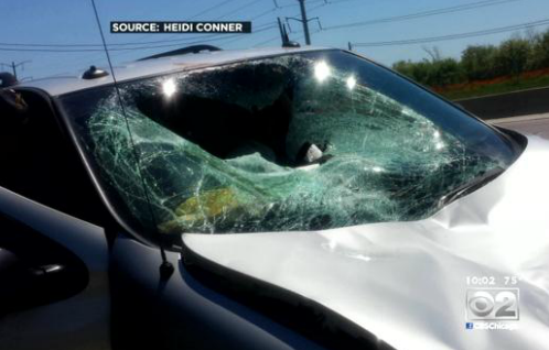A deer leaped or fell from an overpass and landed on this van, which had a mother and four children inside. (Photo: Heidi Conner/CBS2)