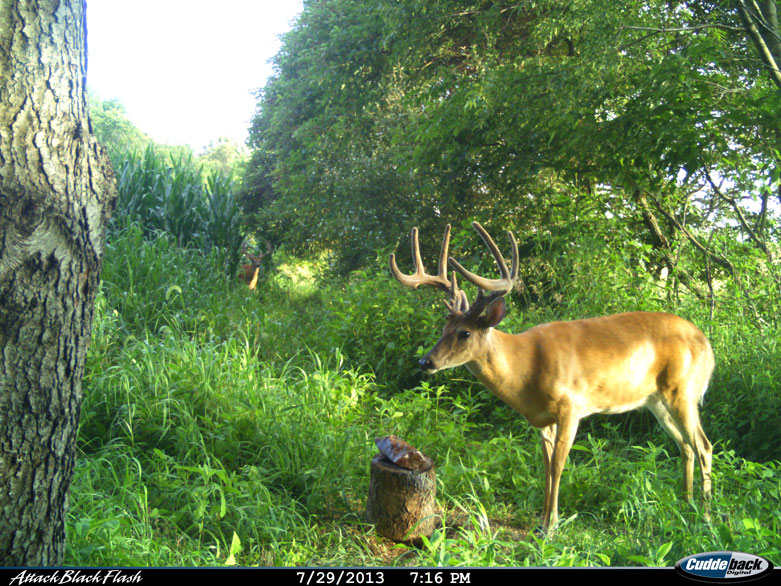 Not worry home made deer mineral licks time you