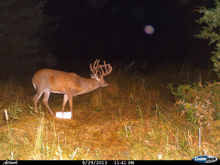 Mineral licks and game cameras are great combinations to survey your deer.
