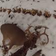 Deer slug gun Ontario