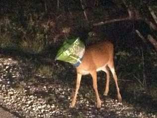 Monroe County, Fla., Sheriff's Deputy Joshua Gordon encountered this Florida Keys deer with its head stuck in a food chip bag and removed the bag without problem. (Photo: Monroe County Sheriff's Office)