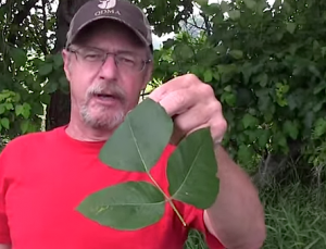 Hey Deer Hunters, Does Poison Ivy Drive You Crazy?