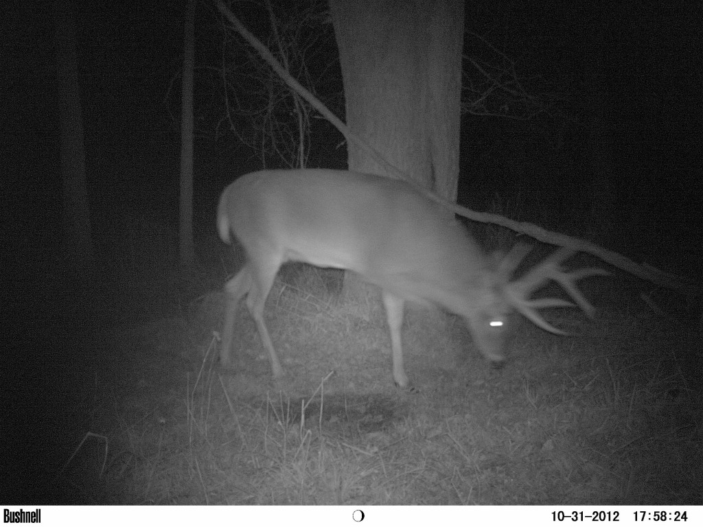 This is another buck I'm hoping to run into. His name is Grizzley... A name I came up with from his massive grizzley bear looking neck!