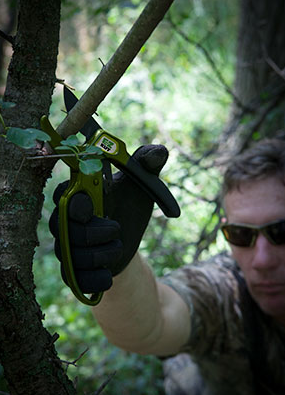 Pruning limbs and cutting trees, thinning timber of undesired trees and hinge cutting are ways to improve your property without spending much money.