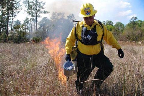 Florida burn