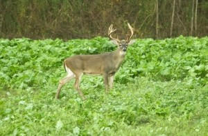 Wildlife managers and landowners preparing and planting food plots will benefit from the new USDA planting guidelines.