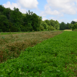 One of the most common problems in food plots, especially perennials, is weed competition. Weeds rob your plot of essential nutrients, water, and root space.