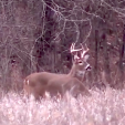 GEB  Big buck in beans