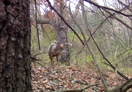 "Hunters ask the question every year: ""Where do the bucks all go?"" Auburn University's Deer Lab research is answering some of those questions."