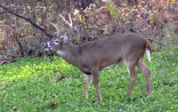 Best Food Plot Gameplan for Bowhunters