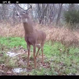 GEB  Buck on camera