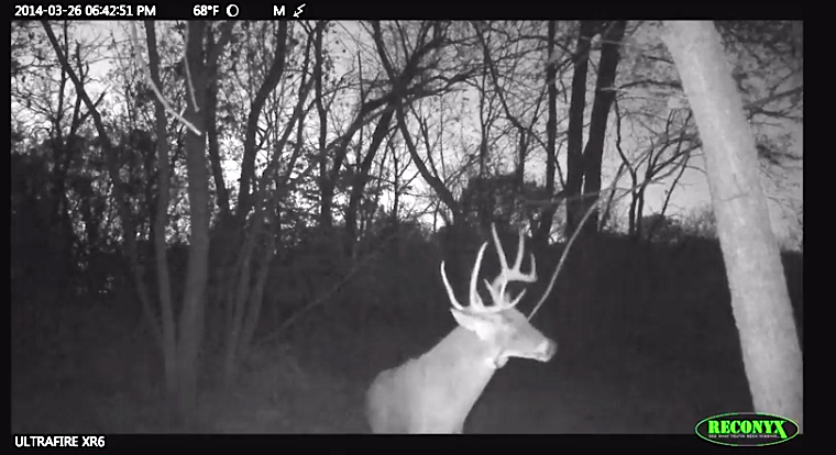 GEB  Buck on camera1