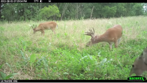 Bucks hang out together at some times of the year but research shows that big bucks tend to be loners and want their own space.