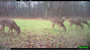 Food plots can provide several things for hunters: the chance to see and watch deer, kill some of them throughout the year, provide nutritious supplemental food to wildlife, and camera surveys.