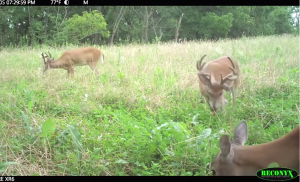 Well-prepared food plots can provide great supplemental food for deer, turkey and other wildlife all year.