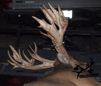 This monster rack from Wisconsin could be a state record with its amount of mass and scorable points. (Photo: WhaleTalesArchery.com)