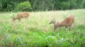 Food plots can provide year-round supplemental nutrition for wildlife.