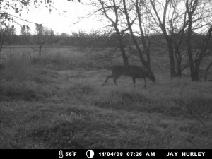 Cameras can give you insights on whether bucks are moving during the day or night.
