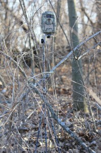 Cameras offer clues about bucks, patterns and more.