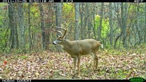 testing trail cameras