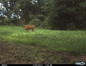 Adding Grow the Bone deer feed to your current feeding program can greatly increase the consumption rate of your feed. To inventory the deer using your sites, be sure to place a trail camera nearby.
