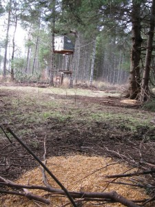 Deer baiting citations have hit a record in Minnesota. (Photo: Minnesota DNR)
