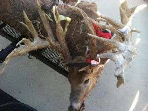 This Indiana monster non-typical reportedly scored 309-plus and could be the new world record for a hunter-killed non-typ whitetail!